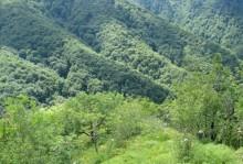 Gozdni rezervat Kobile (T.Jančar)