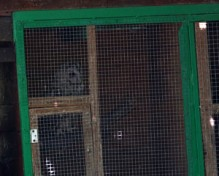 Lesna sova v ujetništvu