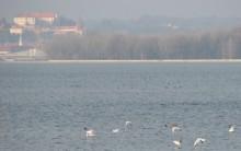 Ptujsko jezero (L.Božič)